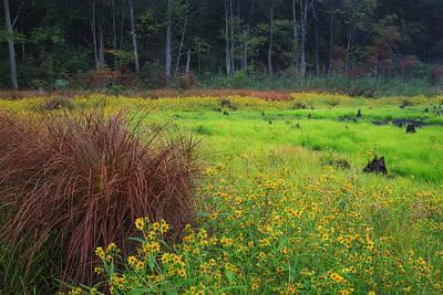 Autumn Grass Poster