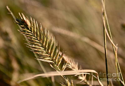 Autumn Grasses Poster by Linda Bianic