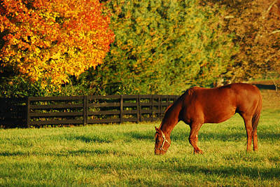 Autumn Grazing Poster by James Kirkikis