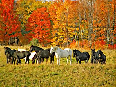 Autumn Herd Oil Poster by Steve Harrington