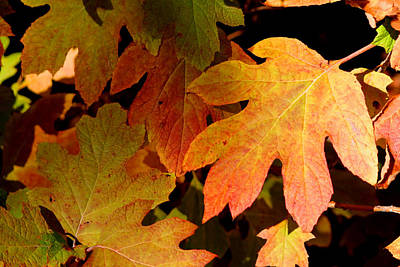 Autumn Hues Poster by Living Color Photography Lorraine Lynch