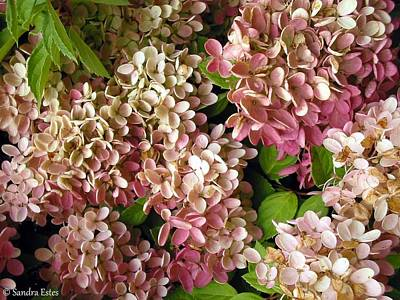 Autumn Hydrangeas Poster by Sandra Estes