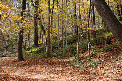 Autumn In Grant Park 4 Poster