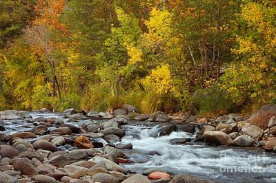 Autumn In Oak Creek Canyon Poster by Richard and Ellen Thane