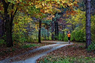 Autumn Jog Poster by Nikolyn McDonald