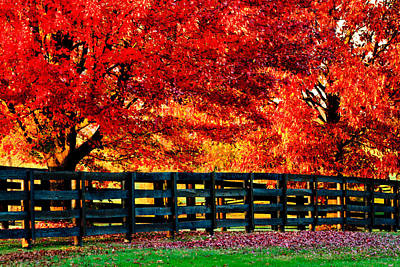 Autumn Kentucky Maples Poster