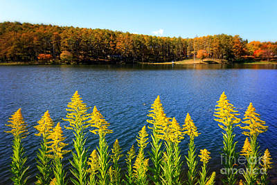Autumn Lake With Canada Goldenrod Poster