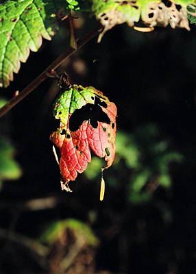 Poster featuring the photograph Autumn Leaf by Cathy Mahnke