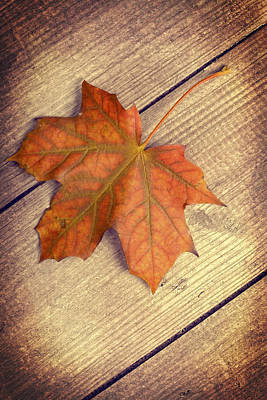 Autumn Leaf Poster by Amanda Elwell