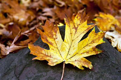Poster featuring the photograph Autumn Leaf by Crystal Hoeveler