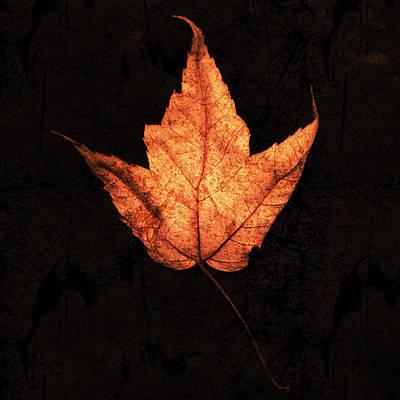 Autumn Leaf On Black Poster