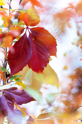 Autumn Leaves Abstract Poster