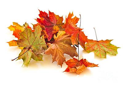 Autumn Leaves Poster by Elena Elisseeva