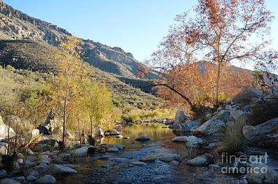 Autumn Leaves In Sabino Canyon At Sunset Poster by Rincon Road Photography By Ben Petersen