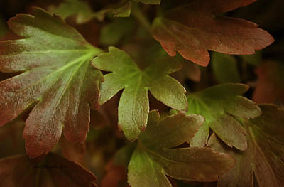 Autumn Leaves Poster by Jean OKeeffe Macro Abundance Art