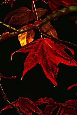 Poster featuring the photograph Autumn Leaves by Lesa Fine