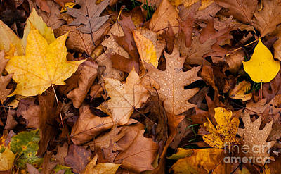 Poster featuring the photograph Autumn Leaves by Matt Malloy