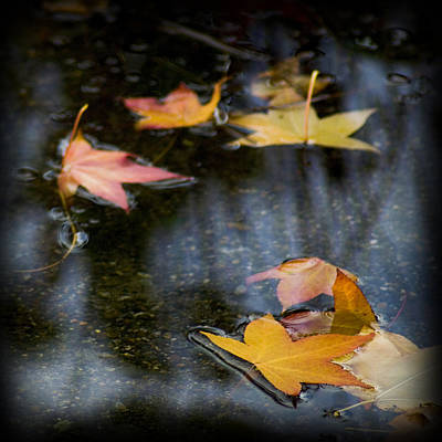 Autumn Leaves On Water Poster by Yulia Kazansky