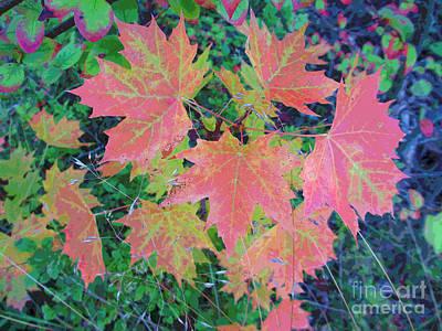 Autumn Loads It's Paintbrush Poster
