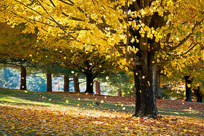 Autumn Maple Tree Fall Foliage - Wonderland Poster