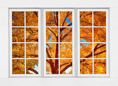Autumn Maple Tree View Through A White Picture Window Frame Poster