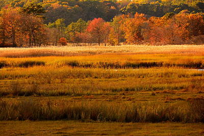 Autumn Marsh Poster by Raymond Salani III