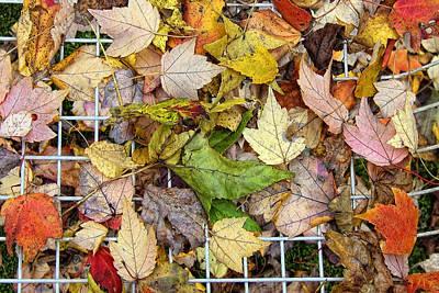 Autumn Medley Poster