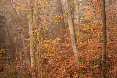 Poster featuring the photograph Autumn Mist by Patrice Zinck