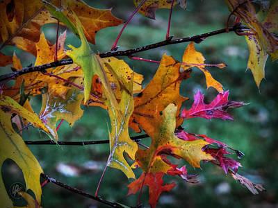 Autumn Oak Leaves Macro 001 Poster by Lance Vaughn
