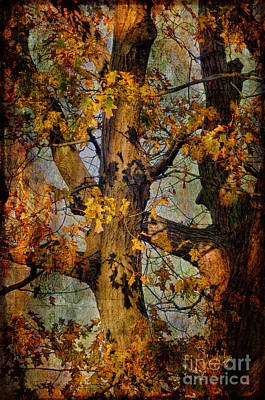 Autumn Oaks In Dance Mode Poster by Lois Bryan
