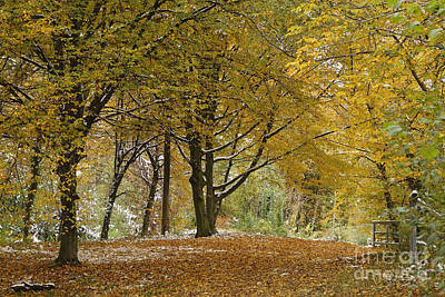 Poster featuring the photograph autumn on Moenchsberg in Salzburg by Rudi Prott