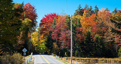 Autumn On Rondaxe Road Poster by David Patterson