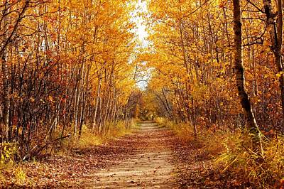 Autumn On The Harte Trail Poster by Larry Trupp