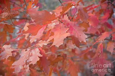 Autumn Paintbrush Poster