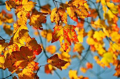 Autumn Petals Poster