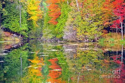 Autumn Rainbow Poster by Terri Gostola