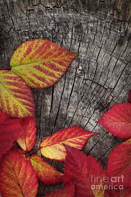 Autumn Red Leaves Poster