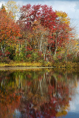 Autumn Reflection Landscape Poster by Christina Rollo