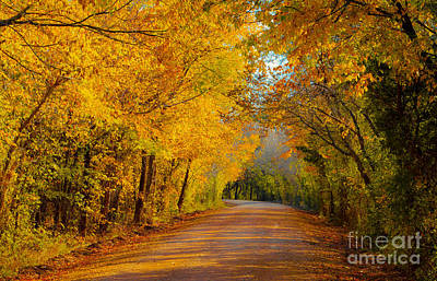Autumn Road Poster by John Roberts