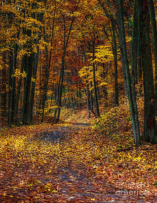 Autumn Roadway Reclamation Poster by Trey Foerster