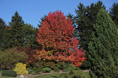 Autumn Scene Poster by Bill Woodstock