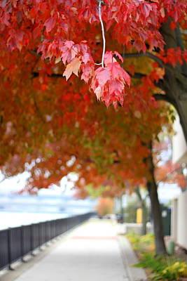 Poster featuring the photograph Autumn Sidewalk by Viviana  Nadowski