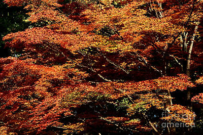 Poster featuring the digital art Autumn Solarisation 1 by Rudi Prott
