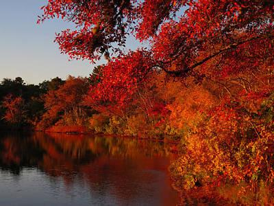Poster featuring the photograph Autumn Splendor  by Dianne Cowen
