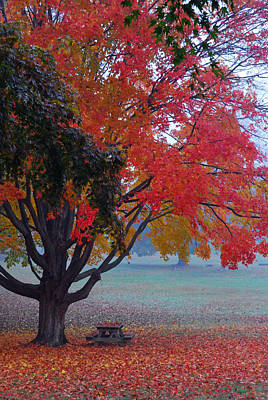 Poster featuring the photograph Autumn Splendor by Lisa Phillips