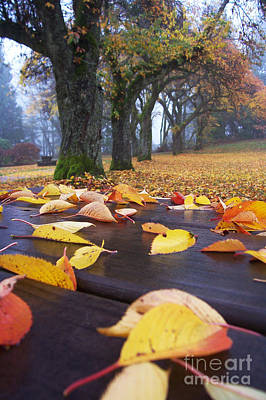 Poster featuring the photograph Autumn Table by Maria Janicki