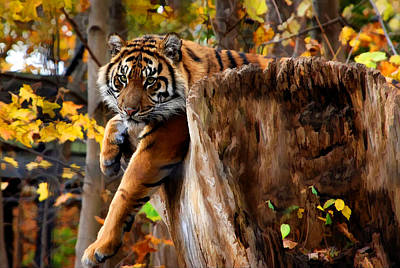 Autumn Tiger Poster by Elaine Manley