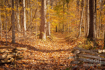 Autumn Trail Poster by Brian Jannsen