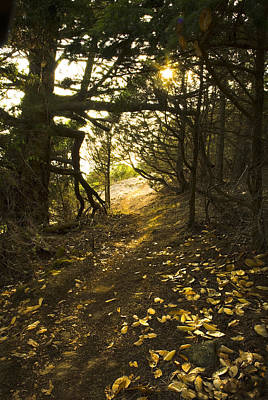 Autumn Trail In Woods Poster