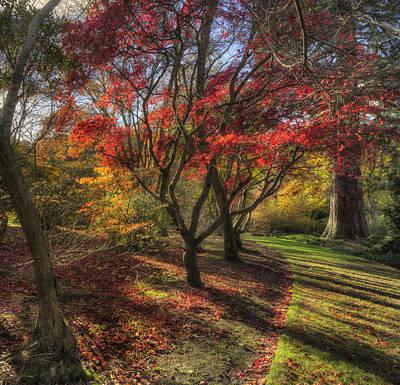 Autumn Tree Sunshine Poster